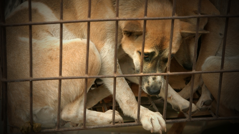 Dog Thief Down: Pet lovers turned vigilantes in Vietnam (VIDEO ...